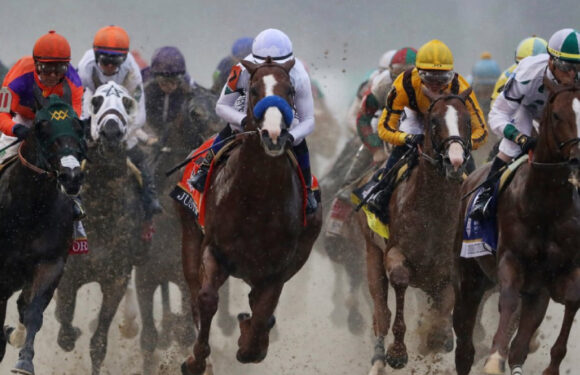 How Many Race Horses Are There in A Race?