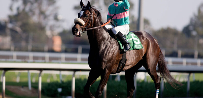 The Best Season For Horse Racing