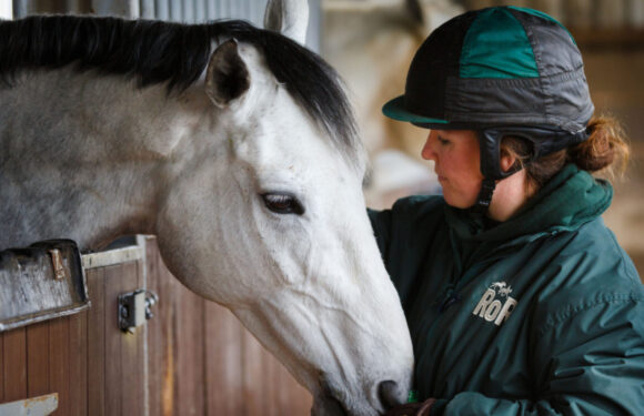 Caring tips for racehorses