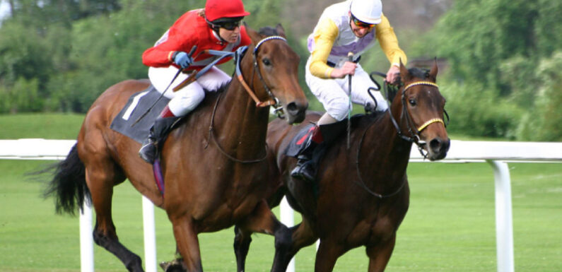 From A Beginner To A Pro: How To Ace Horse Betting