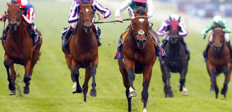 Know About The Types And Rules Of Horse Racing