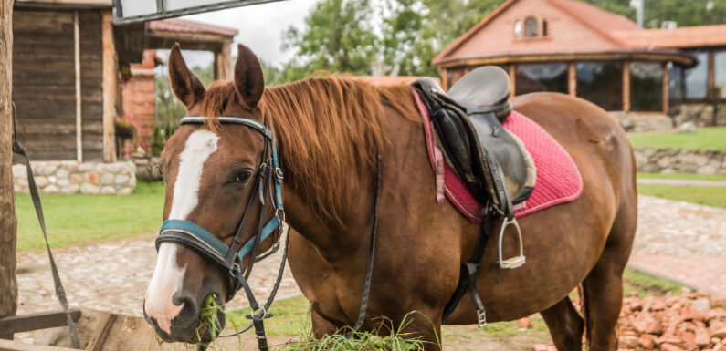 How to keep your race horse healthy?