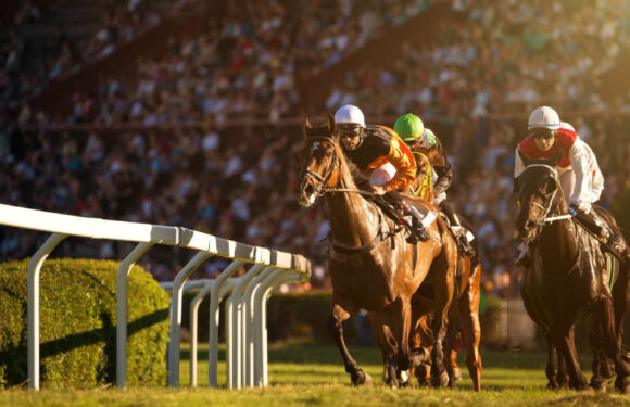 All you need to know about horse racing