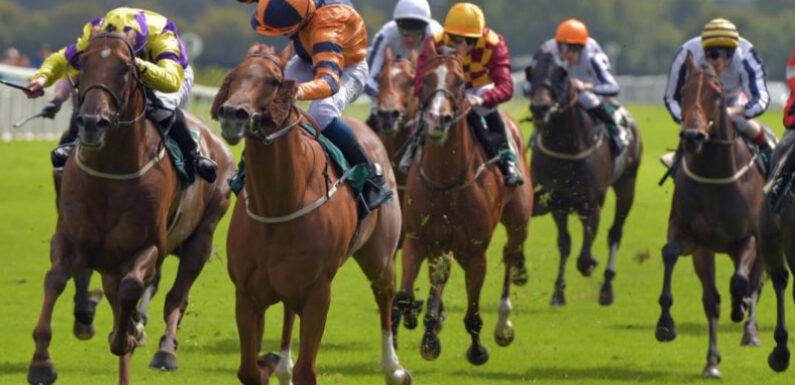 A perfect guide to know about racing horses