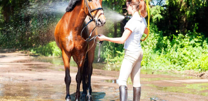 Tips To Assist Your Horse In Heat Stress Management