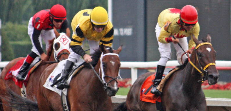 An Easy Guide To Win Money In A Horse Racing Bet