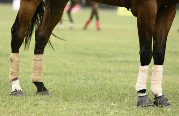 Choosing The Best Leg Protection Gear For Your Race Horse