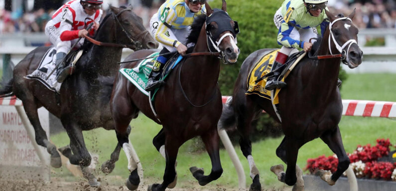 Interesting Facts About The Most Famous Race Horses The World Has Seen
