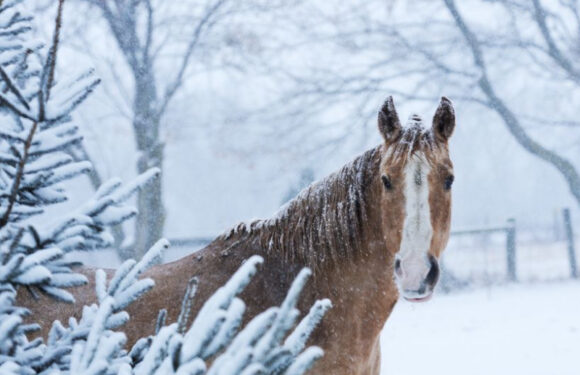 Winter Care Tips To Keep Your Equine In Top Shape